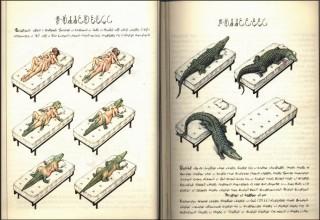 Биологическая часть рукописи Войнича