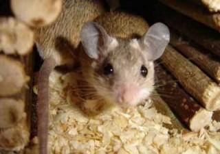 Эксперимент полет мышей