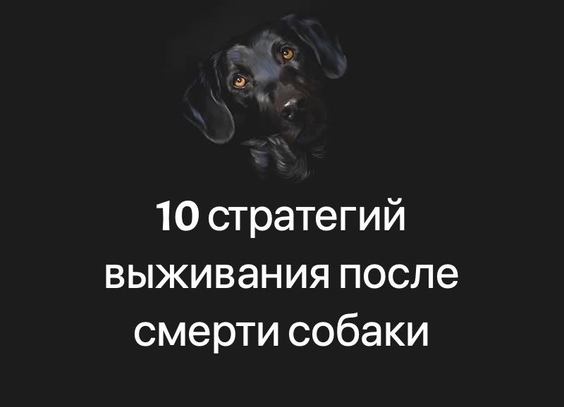 10 стратегий выживания после смерти собаки